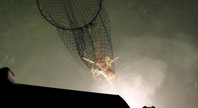 Lobster Bully Netting Charters